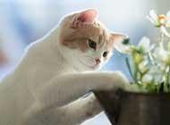 白色可爱小猫咪图片