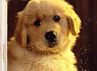 可爱萌宠小狗狗高清图片特写