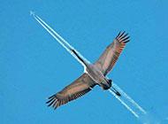 动物搞怪图片之大雁的模仿秀