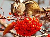可爱的小松鼠图片壁纸高清推荐