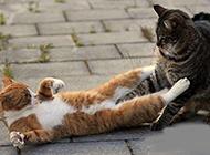 搞笑猫咪抓痒囧图之别乱摸
