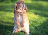 欢蹦乱跳的可爱小兔子高清大图