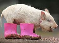 动物搞怪图片之可爱的猪八戒
