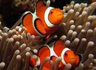 海底世界里的可爱鱼儿唯美图片
