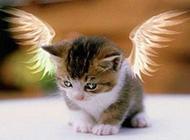 聪明淘气的小猫咪图片