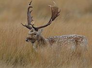 森林精灵鹿唯美图片