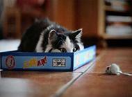 动物爆笑图片之怕老鼠的猫咪