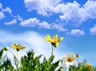 春天唯美风景壁纸清新护眼