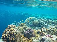 迷人的海底世界珊瑚美景图片