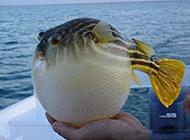 胖胖的鱼类动物搞笑图片