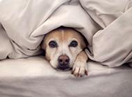 可爱动物的小生活图片推荐