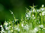 春天草地绿色背景壁纸清新优美