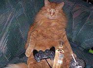 动物恶搞图片之猫王的待遇