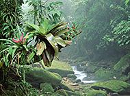 山涧溪流瀑布倾洒而下风景美图