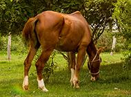 温驯安静的高清骏马图片