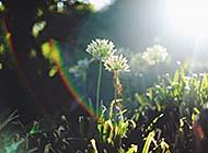 夏日清凉唯美田园绿色风景高清美图