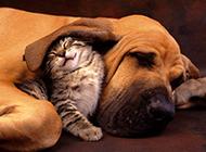 小猫咪狗狗可爱合照萌图