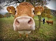 一组超有爱的动物世界图片