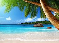 夏天海边椰树风景高清图片