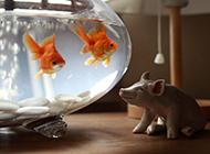 清新意境金鱼图片欣赏