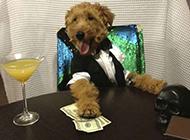 狗狗搞怪服装之我不差钱