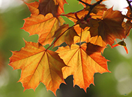 秋天的颜色唯美高清图片