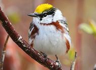 东北野生鸟类图片高清摄影