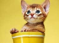 调皮搞怪的小猫咪高清精选壁纸
