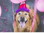 聪明狗狗欢乐逗趣时光图集