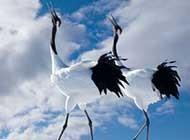 气质丹顶鹤高清唯美动物图片