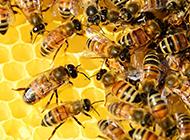 密密麻麻的蜜蜂蜂巢图片