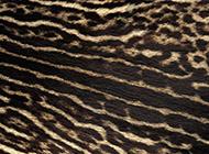 动物界百兽猛虎的皮毛纹理高清图