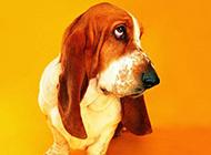 可爱狗狗的趣味搞怪高清写真