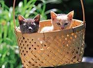 后院二只可爱的猫咪