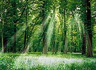 林间美景绿意盎然养眼风景