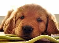 熟睡狗狗的各种萌态