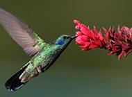 置身花丛的蜂鸟图片下载