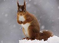 自然界动物的故事图片欣赏