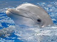 大千世界聪明的小动物图片