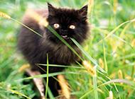 可爱小猫咪高清动物图片特写