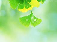 绿色壁纸风景清新护眼