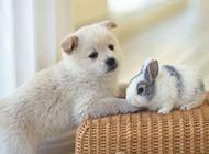 森林萌兔子可爱美图精选