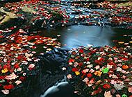 清澈见底溪流唯美风景图片