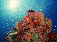 大开眼界的海底世界桌面高清壁纸
