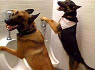 爆笑各种动物奇葩图片