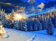 旭日暖阳下的冬日雪景唯美图片