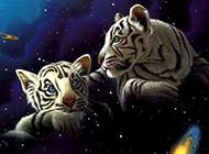 动物与星球创意高清壁纸