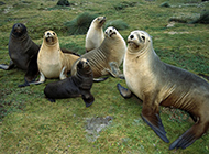 宽屏野生动物图片合集