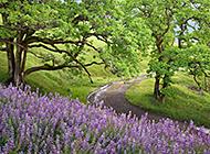 绿色自然花卉草木护眼美景图片