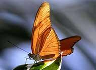 花飞蝶舞超高清桌面壁纸